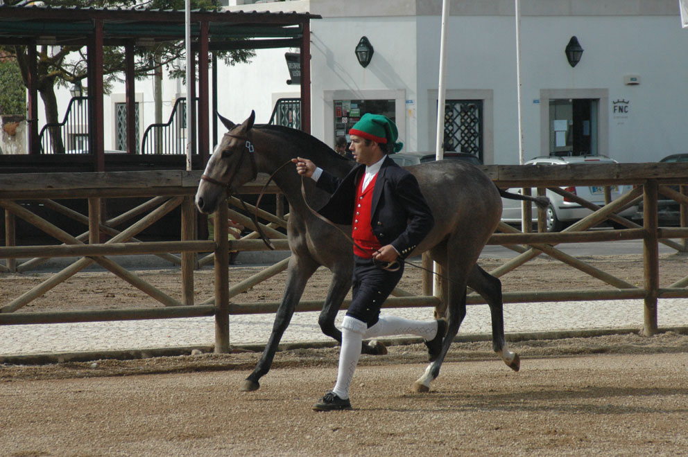 cavalos_golega2