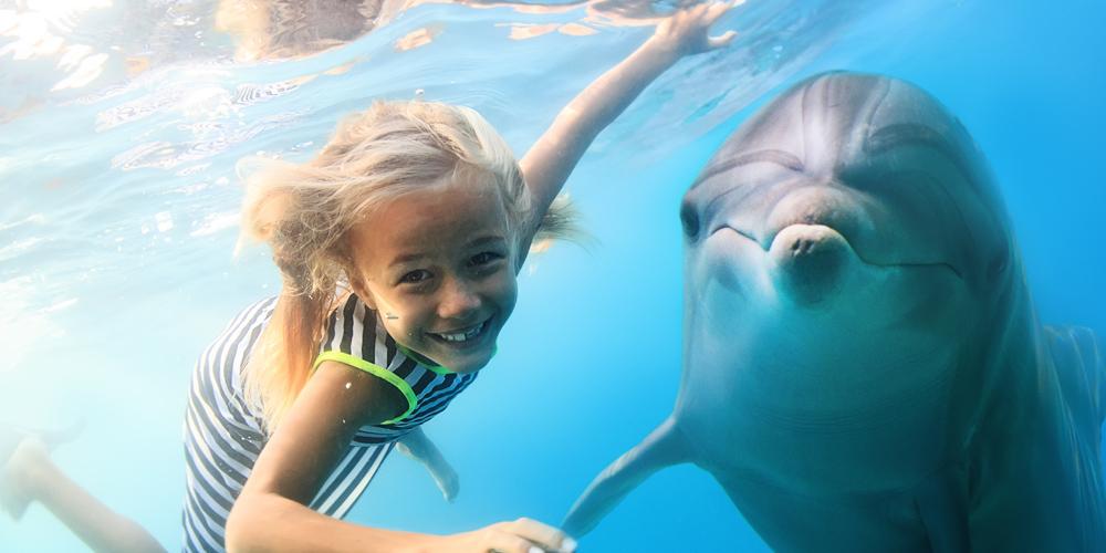 golfinhos-troia-2