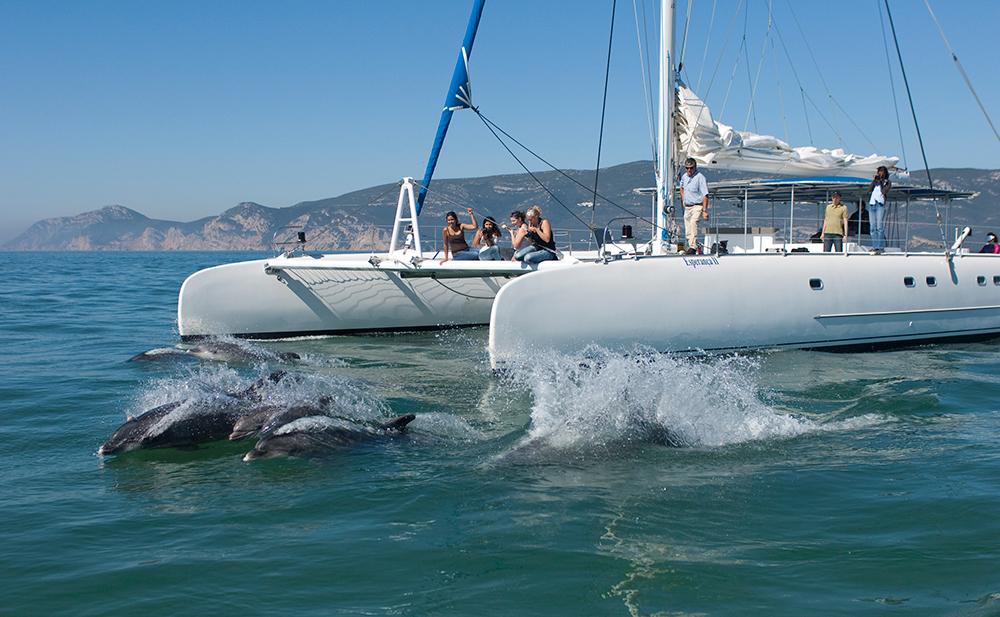 Passeio de barco pela Baía de Setúbal para observação de golfinhos.